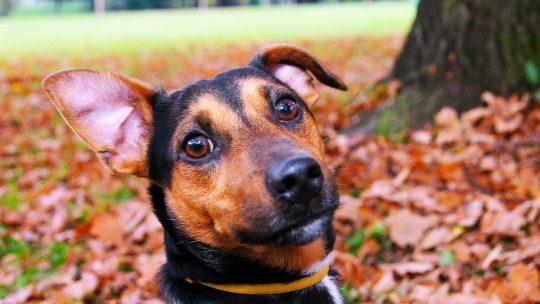 Localiser facilement son chien avec le collier GPS Weenect